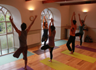 Yoga Trees in Emilys class